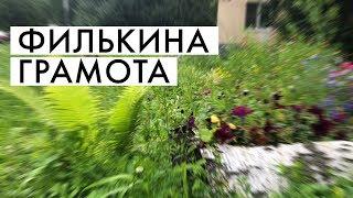 Озеленяем двор   ФИЛЬКИНА ГРАМОТА #1