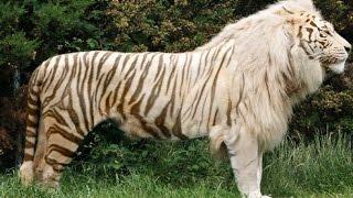 Top 10 Animales Increíbles Creados Por Humanos - FULL TOPS