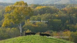 牧場の動画素材, 4K写真素材