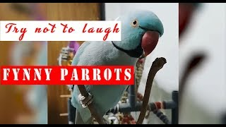 PARROTS GOING CRAZY - Try not to laugh