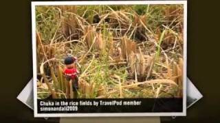preview picture of video 'Ping'An - The Longji Rice Terraces Simonandali2009's photos around Longji, China (travel pics)'