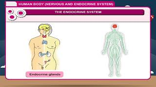 CH04-CHEMICAL COORDINATION IN ANIMALS-PART01-ENDOCRINE GLANDS