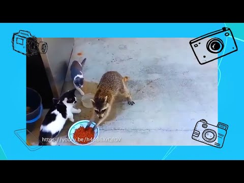 , title : 'Прикольные ролики про животных и детей - Покажи класс! - С добрым утром, малыши!'
