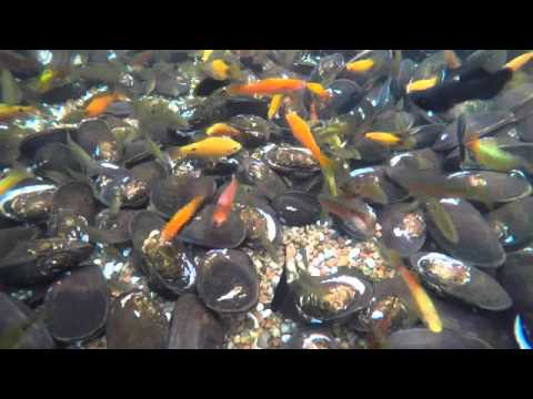 Update Your Pond In Autumn