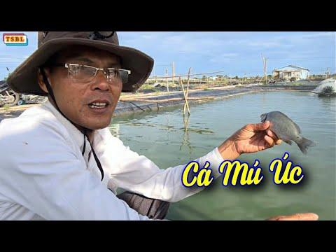 Tham quan Trại cá Phan Khắc Nhật Tiến