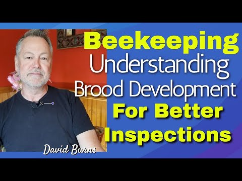 , title : 'Beekeeping | Understanding The Life Cycle of Honey Bees For Better Inspections