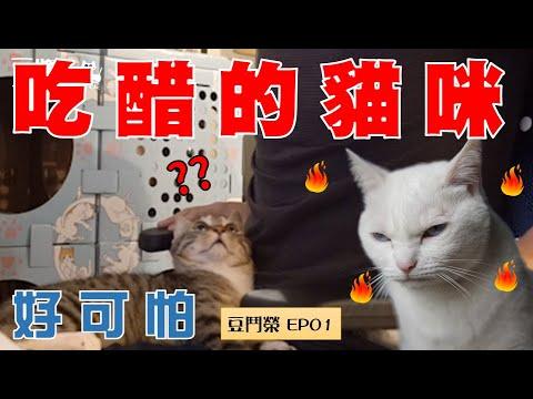 豆漿爭寵吃醋 >///<