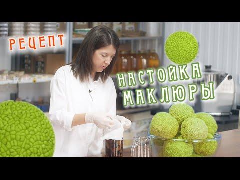 Настойка маклюры (Адамова яблока) рецепт