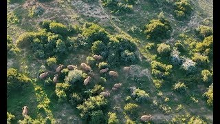 Kwandwe Private Game Reserve, a Fly-in Safari