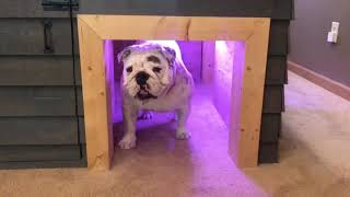 My Custom Doghouse Is Better Than Your Own Apartment!