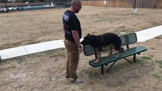 "German Shepherd ""Duke"" l Amazing Obedience l Dog Trainers San Antonio"