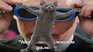 флекс кота подходит под любую песню