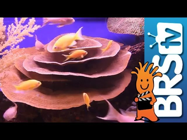 Selecting Fish for a New Reef Tank - EP 1: Fish and Corals
