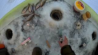 Отчет о рыбалке на межуре