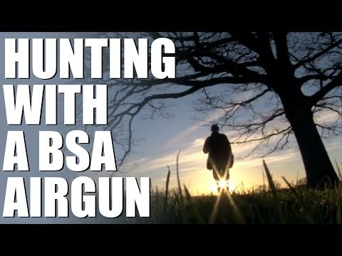 Hunting with a BSA spring air rifle