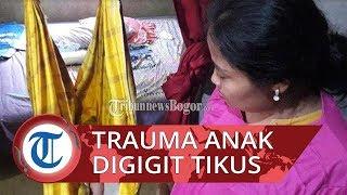 Bayi di Bogor Digigit Tikus Got saat Ditinggal ke Toilet, sang Ibu Trauma