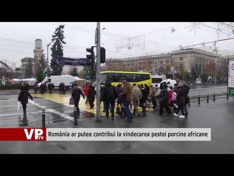 România ar putea contribui la vindecarea pestei porcine africane