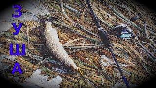 Рыбалка на зуше в орловской области