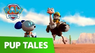 PAW Patrol | Pups Save the Baby Ostriches | Rescue Episode | PAW Patrol Official & Friends