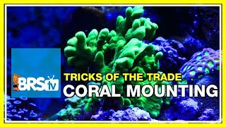 Week 38: Mounting corals: epoxy, super glue, and lighting tweaks | 52 Weeks of Reefing #BRS160