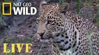 Safari Live - Day 141 | Nat Geo Wild