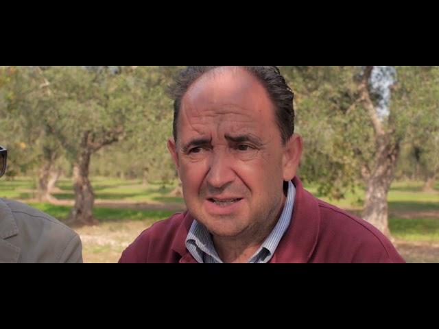 Un viaggio tra gli olivi di Puglia