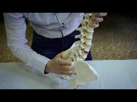 A vállízület betegségei és sérülései