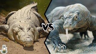 CROCODILE VS KOMODO DRAGON - Which is the strongest?