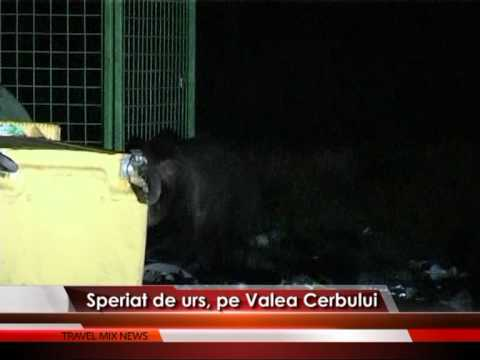 Speriat de urs, pe Valea Cerbului – VIDEO