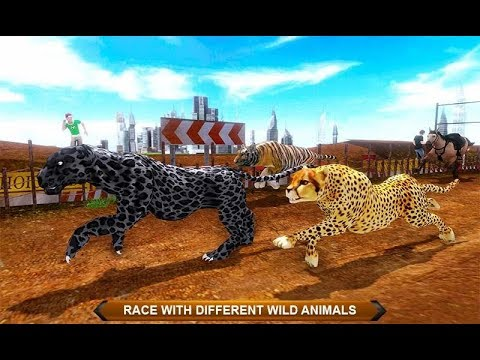 Black Wild Panther Crazy Racing (by Storm Of Games) Panther Vs Cheetah- Android Gameplay #1
