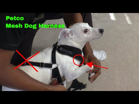 ✅  How To Use Petco Mesh Dog Harness Review