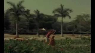 Phool Hai Baharon Ka Bagh Hai Nazaron Ka   - YouTube