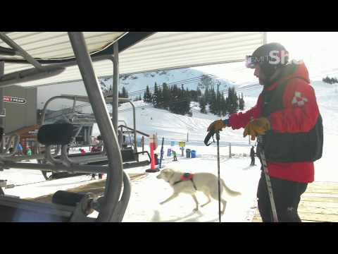 Avalanche Rescue Dog on Shaw TV