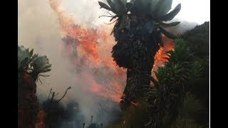 Fire destroys 70ha in Aberdare forest - VIDEO