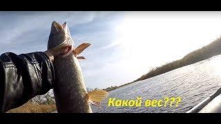 Озера для рыбалки в ростовской области