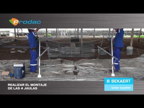 Instalación del Sistema de Jaulas para gallinas de postura