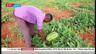 Kilimo cha Tikitimaji chawahakikishia riziki wakulima wa Kitui