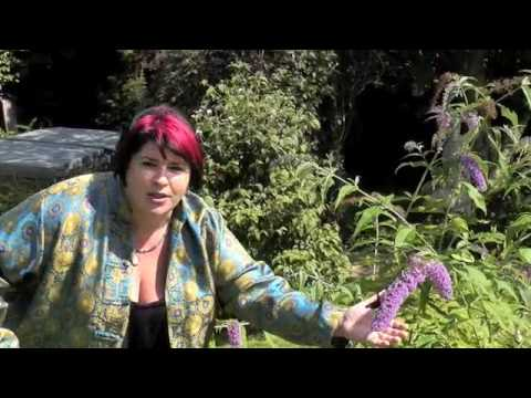 Spiritual Transformation: 21st Century Shaman