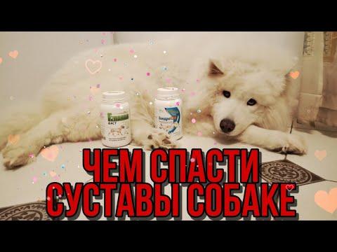 Чем вылечить суставы собаке | Геладринк для собак | честный отзыв
