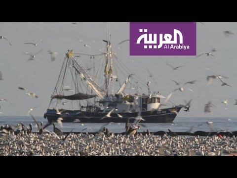 العرب اليوم - شاهد: أميركا وكندا خسرتا مليارات الطيور في 5 عقود