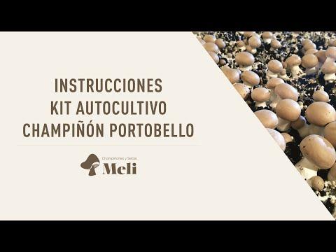 Kit autocultivo setas de champiñón Portobello