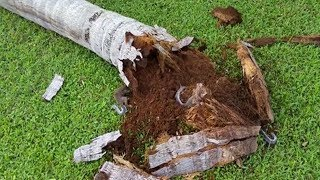Tree At Front Of Their Yard Falls Down- But what They Found Inside They