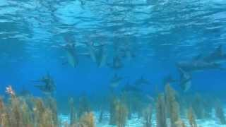 Дельфины, и красивая музыка!!! Для души! 1.Dolphins, and beautiful music!!! For the soul!