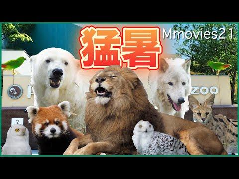 youtube-動物記事2020/12/04 18:14:39