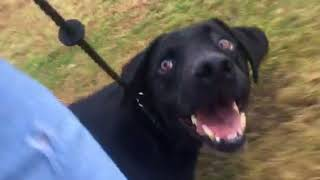 How do you use a slip lead to train a dog?