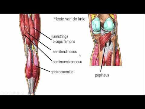 Rückenschmerzen im oberen Teil