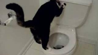 Домашние Животные, Toiliet Cat