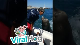 Sea Lion Boards Boat for Snack || ViralHog