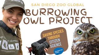 In the Field with San Diego Zoo Global: Saving Burrowing Owls with Citizen Science