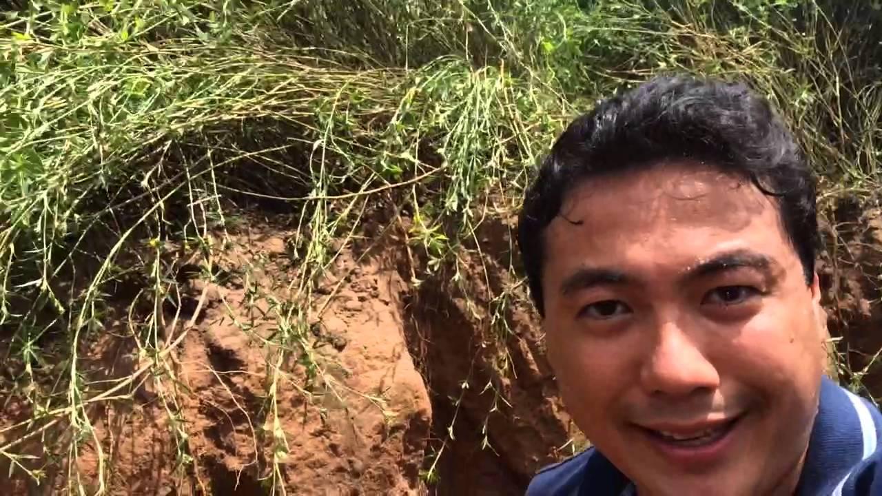 Shunji 7 - Busque nutrientes no fundo do solo, é possível